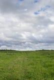 与一棵nekosheny草的领域在多云天气 库存图片
