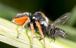 与一次飞行的蜘蛛本质上 宏指令 图库摄影