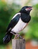 与一欧元的鸟 免版税图库摄影