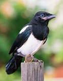 与一欧元的鸟 库存照片