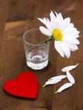 与一点心脏的雏菊 免版税库存图片