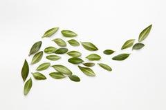 与一点绿色叶子的花卉构成 免版税图库摄影
