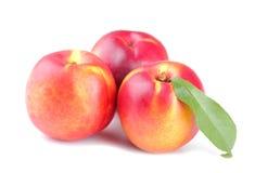 与一片叶子的成熟新鲜的油桃在白色隔绝了背景 免版税库存照片