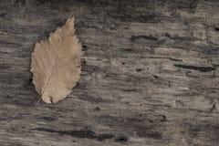 与一片叶子的秋天模板在木背景 免版税图库摄影