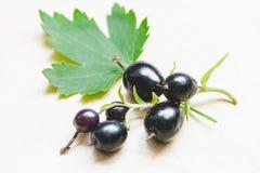 与一片叶子的黑金黄无核小葡萄干莓果在分支孤立 免版税库存照片