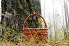 与一片枫叶的柳条筐在杉木森林里 免版税库存图片