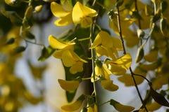 与一种黄色活泼的颜色-正面图的壮观的花 免版税库存图片