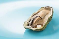 与一颗珍珠的牡蛎在蓝色背景 免版税图库摄影