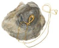 与一颗珍珠的金黄项链在oystershell 免版税图库摄影