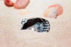 与一颗美丽的珍珠的壳在一个沙滩说谎 图库摄影