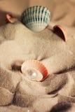 与一颗美丽的珍珠的壳在一个沙滩说谎 库存照片
