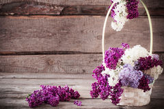 与丁香一个开花的分支的静物画  图库摄影