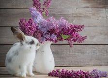 与丁香的复活节兔子 库存图片