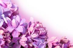 与丁香花的精美花卉背景  图库摄影