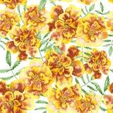 与万寿菊Patula, Tagetes的花卉样式 免版税库存照片