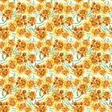 与万寿菊Patula, Tagetes的花卉样式 图库摄影