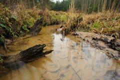 与三个树桩的森林小河 免版税库存图片