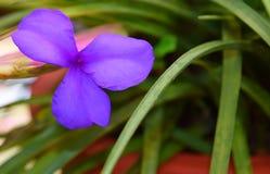 与三个淡紫色淡紫色瓣的花有绿草的留给自然花卉背景 免版税图库摄影