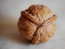 与三倍的对称的不规则的坚果壳 库存照片