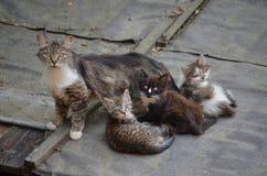 与三只小猫的一只离群猫 免版税图库摄影