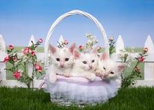 与三只白色小猫的春天篮子在庭院里 免版税库存照片