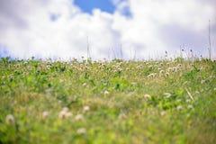 与三叶草的夏天小山 库存照片