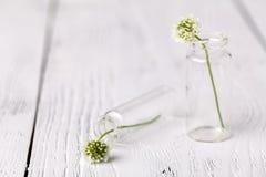 与三叶草的构成在玻璃 与白三叶草的忧郁的静物画 软绵绵地集中 免版税库存图片