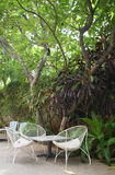 与三把椅子的表在异乎寻常的树下 库存图片