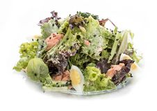 与三文鱼和菜的沙拉用牡蛎调味汁 亚洲午餐 库存图片