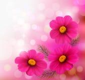 与三朵桃红色花的假日背景。 免版税库存照片