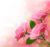 与三朵桃红色花的假日背景。 库存照片
