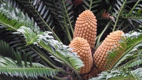 与三朵花的棕榈树 库存图片