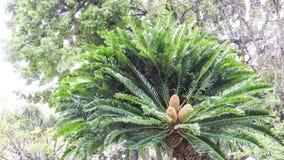 与三朵花的棕榈树 免版税库存照片