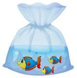 与三条鱼的塑料小袋 库存图片