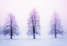 在雾的冬天树在日出 免版税图库摄影