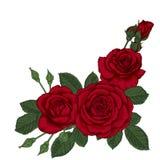 与三片英国兰开斯特家族族徽和叶子的美丽的花束 植物布置 皇族释放例证