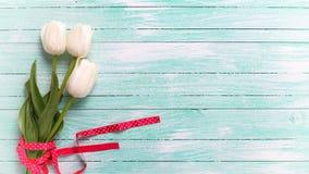 与三白色郁金香的背景在绿松石木板条 免版税库存照片
