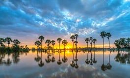 与上升在剧烈的天空的高棕榈树的五颜六色的日出 图库摄影