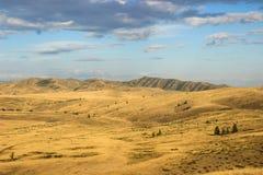 与上升在距离的山的美丽的干燥蒙古干草原 库存图片