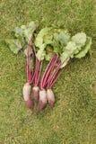 与上面的被洗涤的甜菜从在绿草的一张庭院床 免版税库存图片