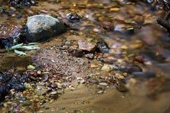 与下石头叶子和沙子的透明冷的森林小河 免版税库存照片