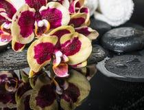 与下落和兰花的开花的枝杈的温泉石头 免版税库存照片