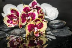 与下落和开花的枝杈兰花的温泉石头 免版税图库摄影