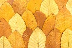 与下落的五颜六色的叶子的明亮的秋季背景 库存图片