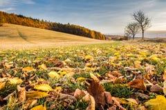 与下落的叶子、树和蓝天的秋季风景 库存照片