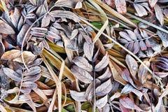 与下落的叶子和棕色草的秋天背景在树冰 免版税库存照片