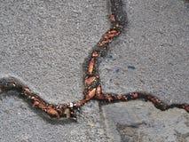 与下落的叶子小块的粒状水泥瓦片凹线 免版税库存照片