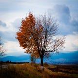与下落的叶子的一半的秋天树 免版税图库摄影