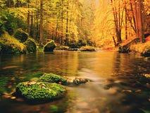 与下落的叶子的冰砾 秋天山河 山毛榉、槭树和桦树叶子 库存照片