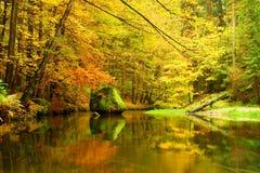 与下落的叶子的大冰砾 秋天山河岸 新鲜的绿色生苔冰砾和用五颜六色的地方教育局盖的河岸 库存照片